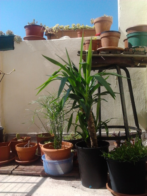 plants on the terrace