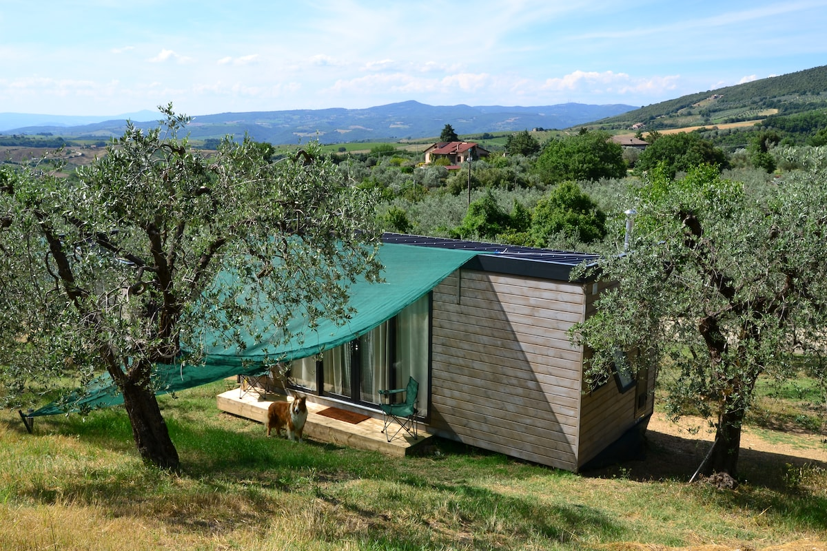 Sleeping in an Umbrian olive grove