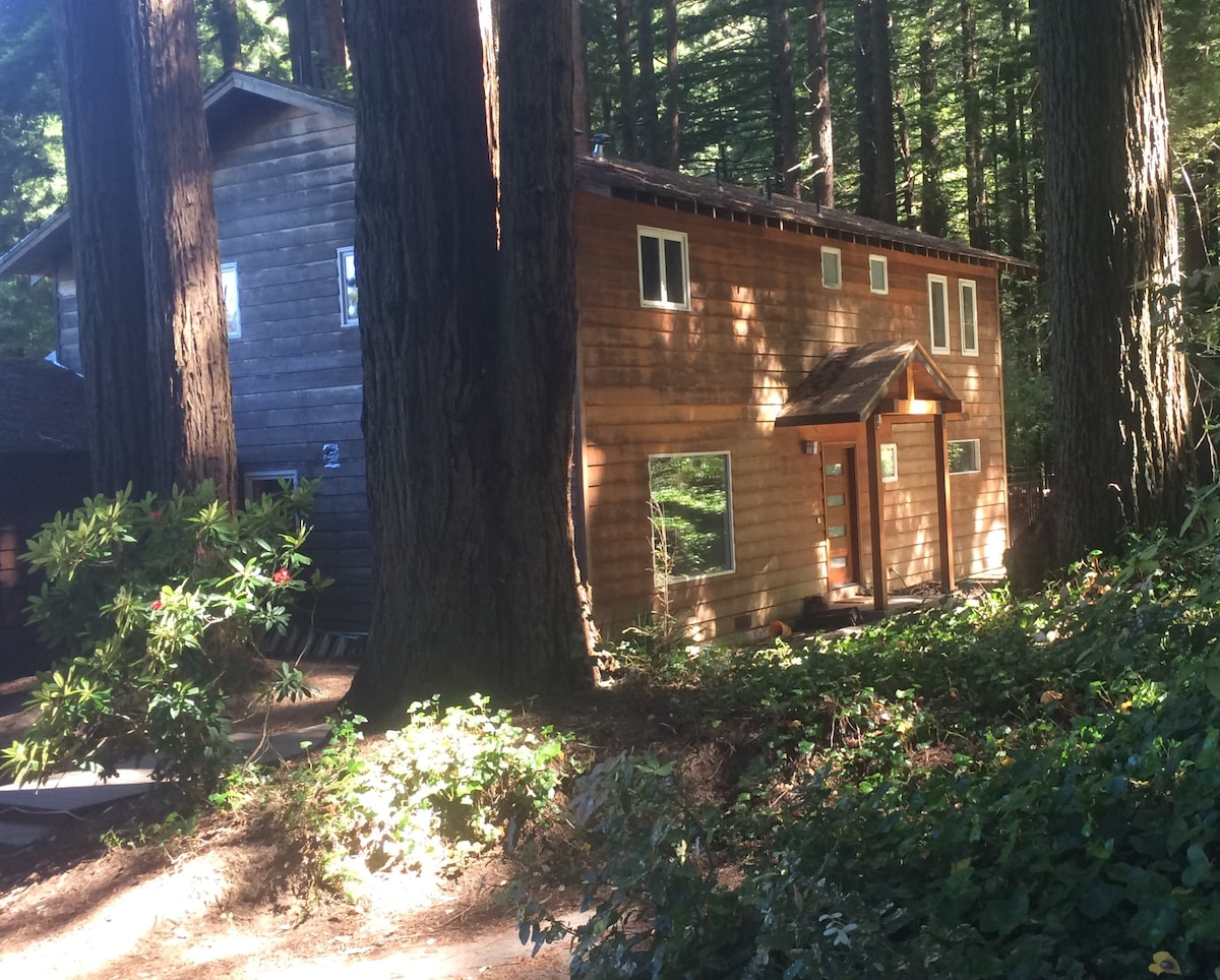 Bay Area Coastal Redwood Retreat