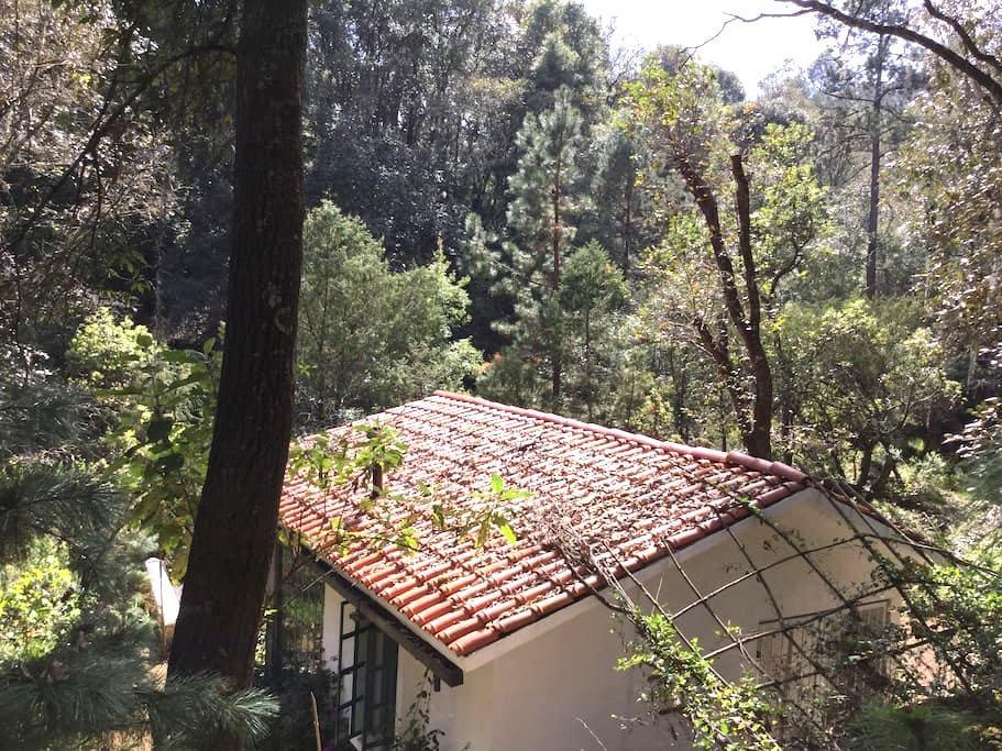 Cottage in Pristine Woods-WiFi - Huasca de Ocampo - Zomerhuis/Cottage