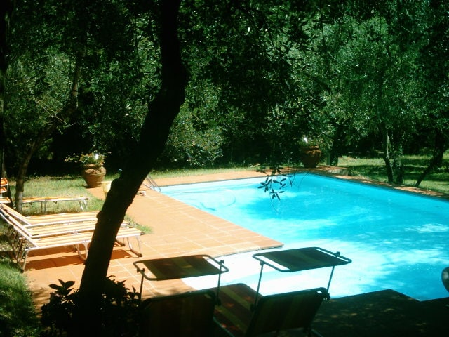 the swimming pool nestled among olive trees