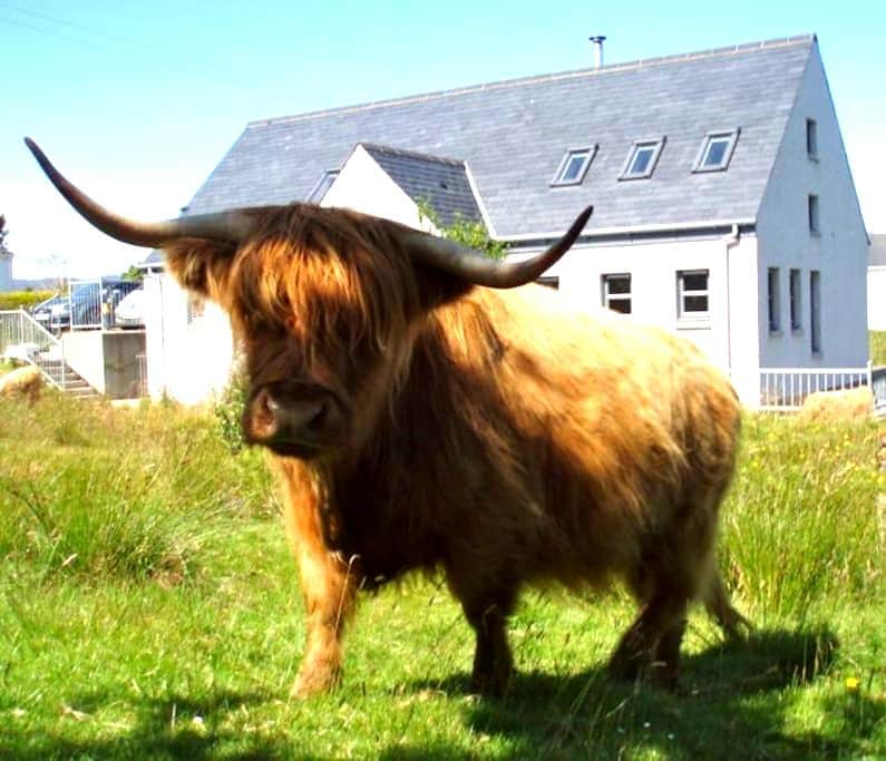 Active Holiday in the Highlands? - Plockton - Rumah