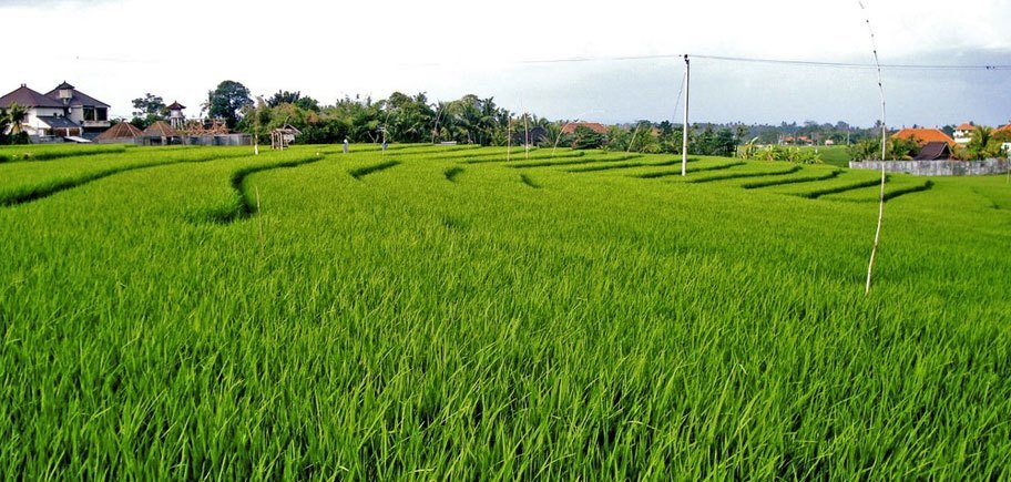 Homestay with ricefield view + pool