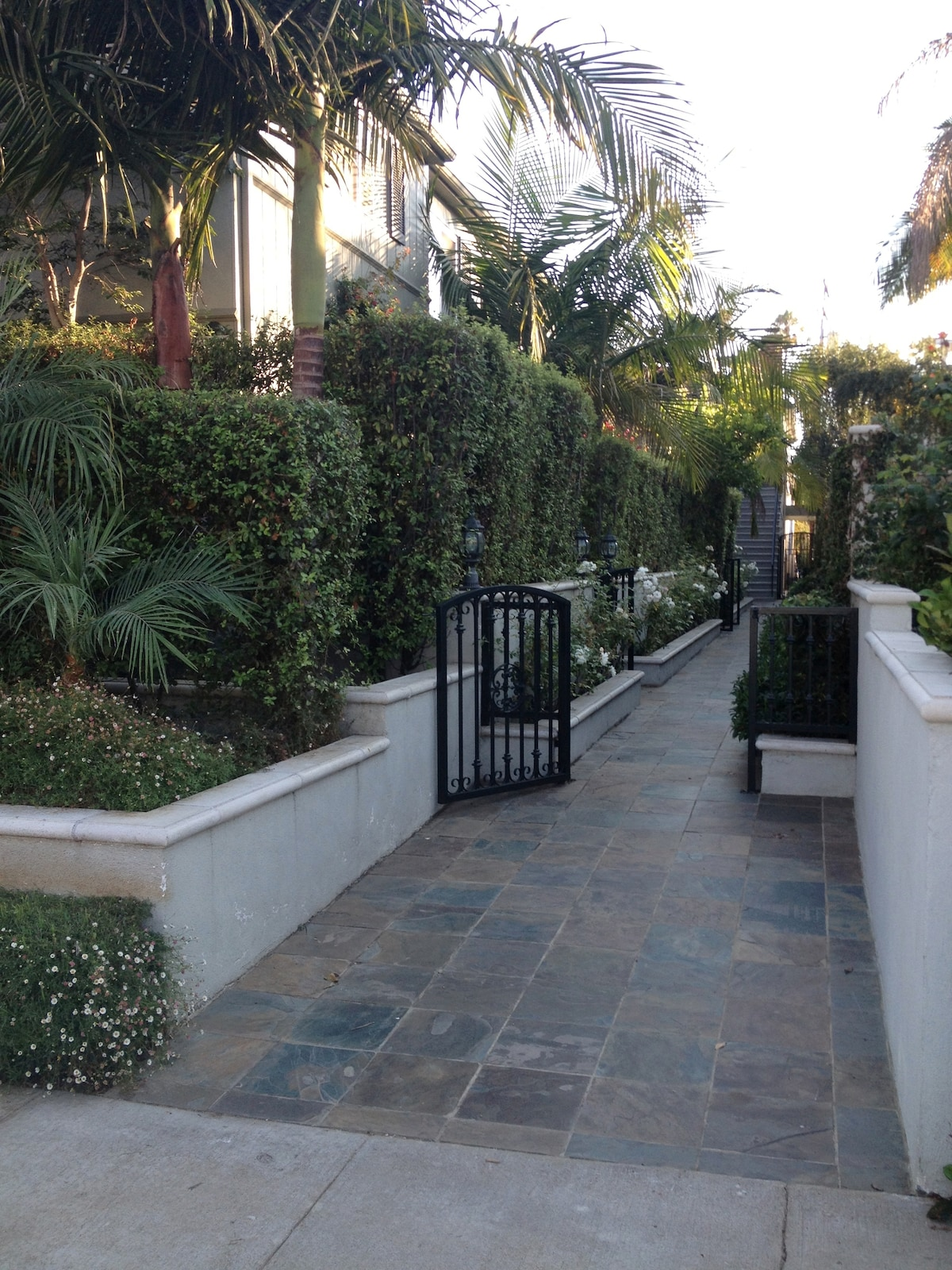 Walkway, meticulously maintained, covered with  roses and gardenias