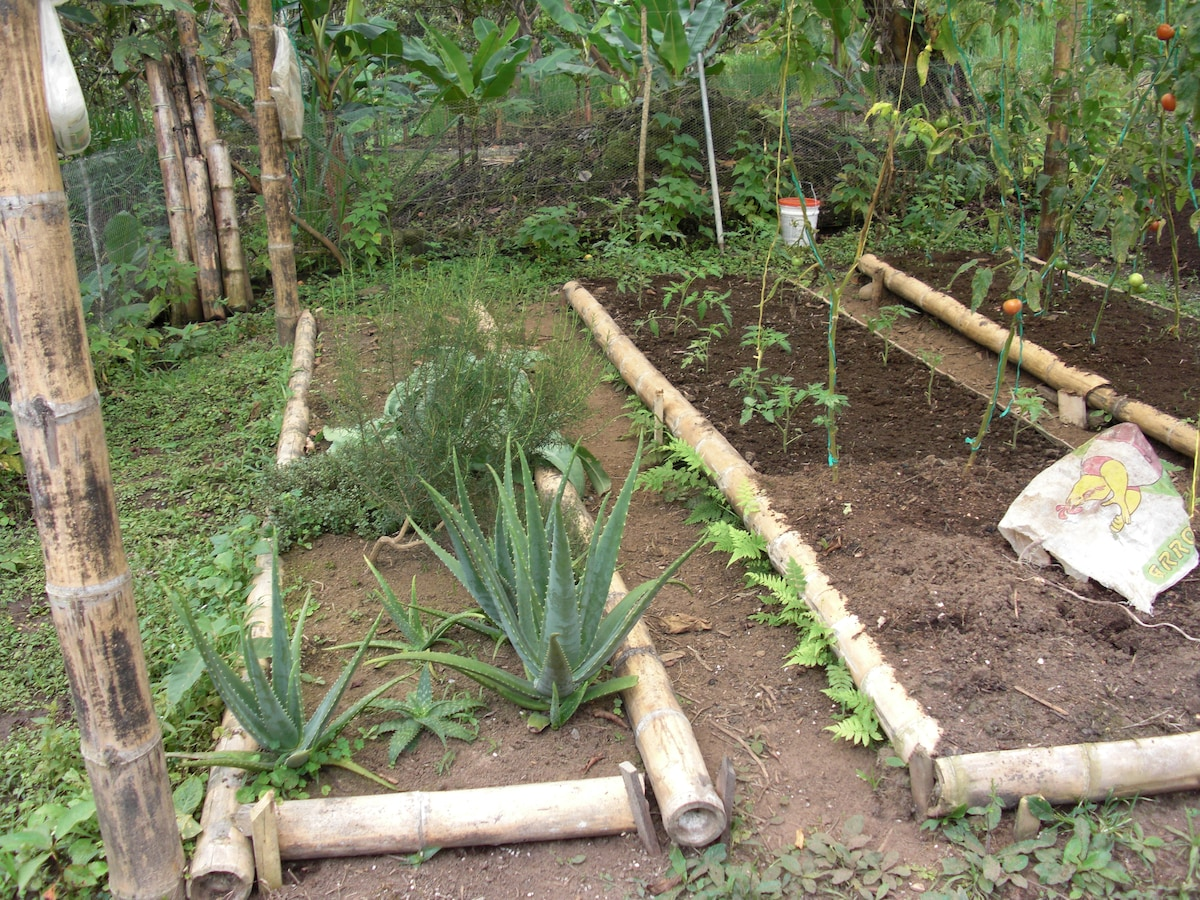 Our organic gardens where we grow fresh fruits, vegetables, cocoa beans, coffee and raise chickens.