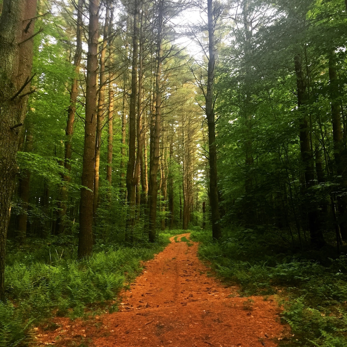 Escape to the Woods of Northwest CT