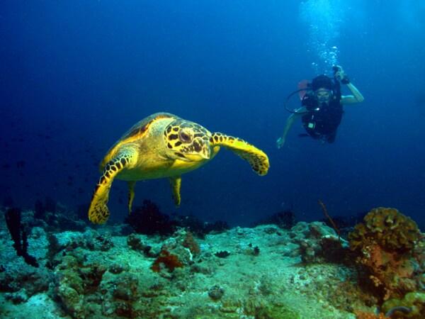 Mergulho na Praia do Forno - Arraial do Cabo