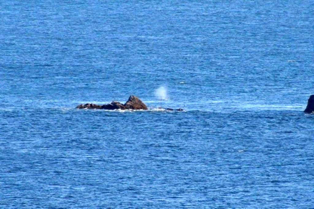 Watch the whales from Rainbow Rock - 布鲁金斯(Brookings)