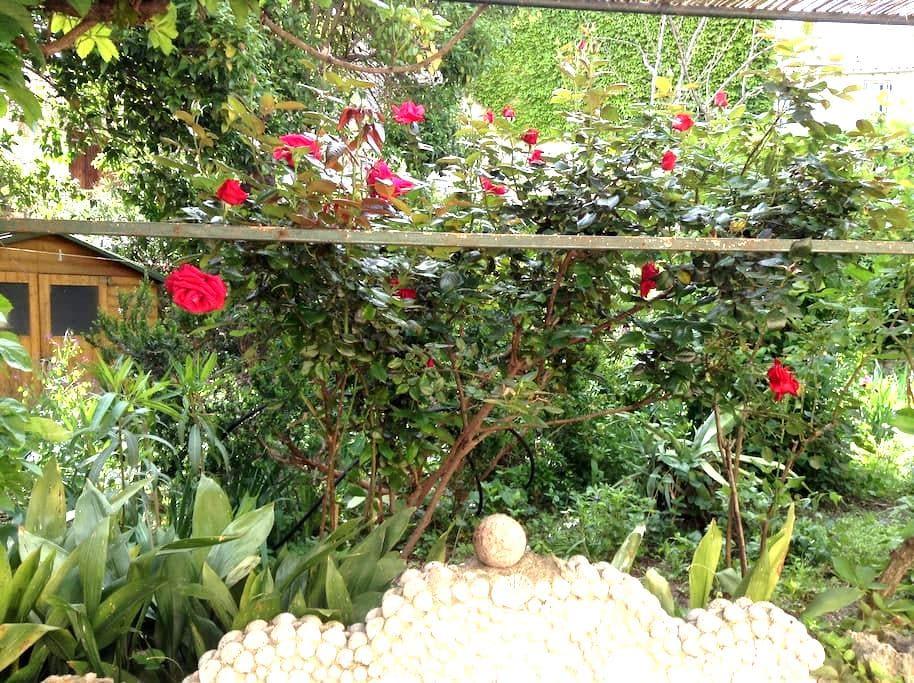 Chambre et salle d eau sur jardin - Montpellier - Bed & Breakfast