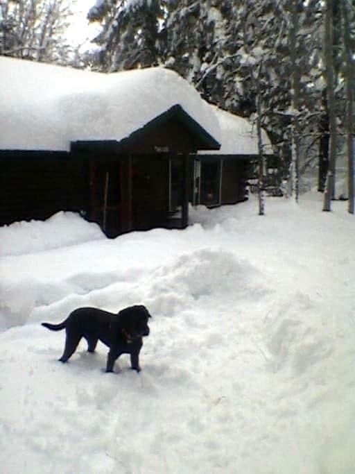 Cozy room in cozy cabin! Relax! - Mount Shasta - กระท่อม