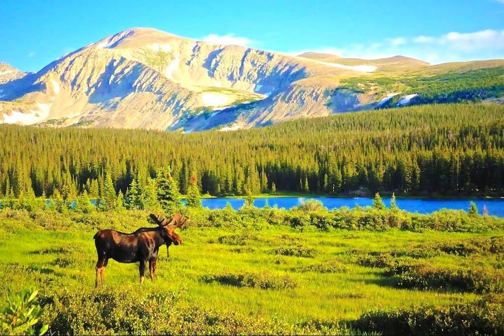 Moose Meadow - Homer - Hytte