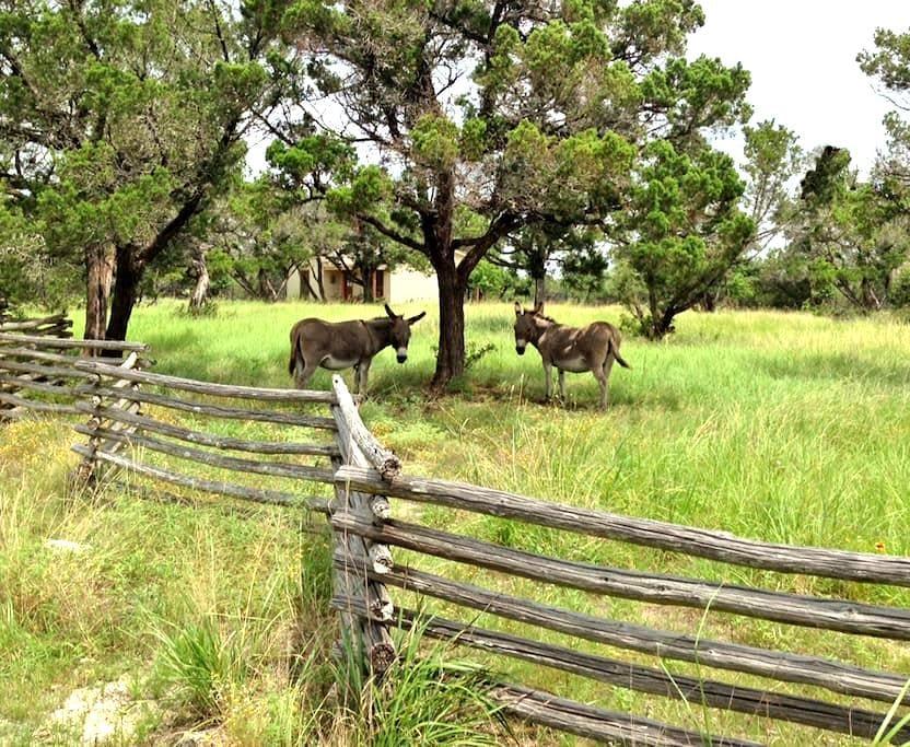 The Curly J - hilltop mini-ranch! - Austin - Bed & Breakfast