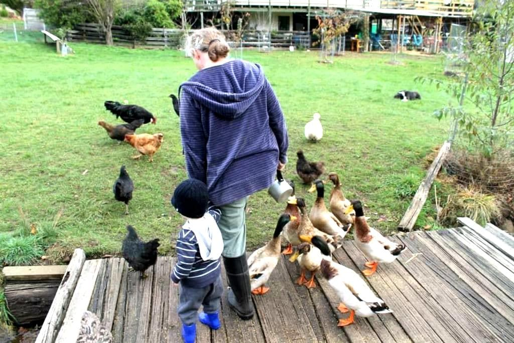 Nature's chorus calling! (Only 20mins 2 Penguins!) -  Launceston - Bed & Breakfast