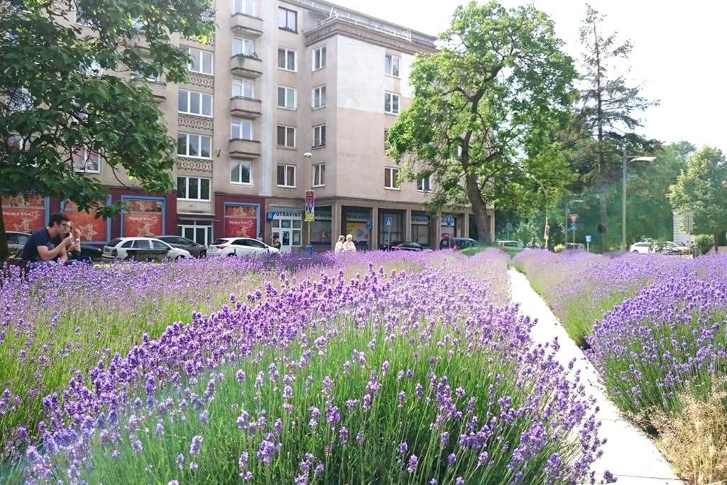 AWESOME 2BR  CITY CENTRE DREAM HOME !!! - Košice - Byt