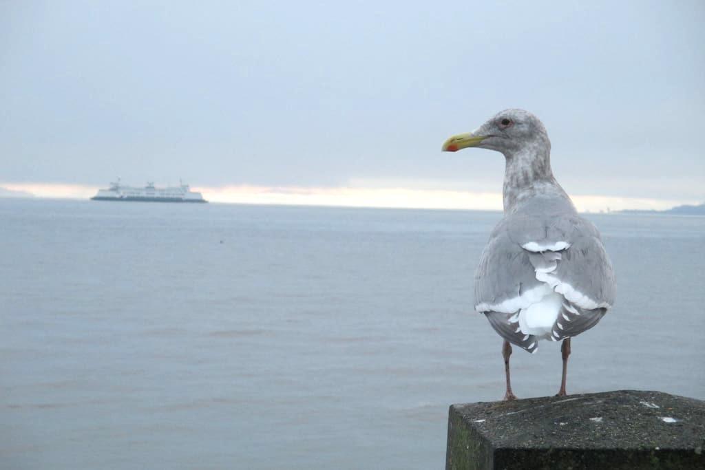 Quiet, private Alki Beach hideaway - Seattle