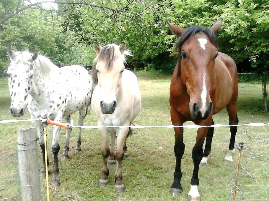 Gite à la ferme, calme et reposant - Yvignac-la-Tour - Casa