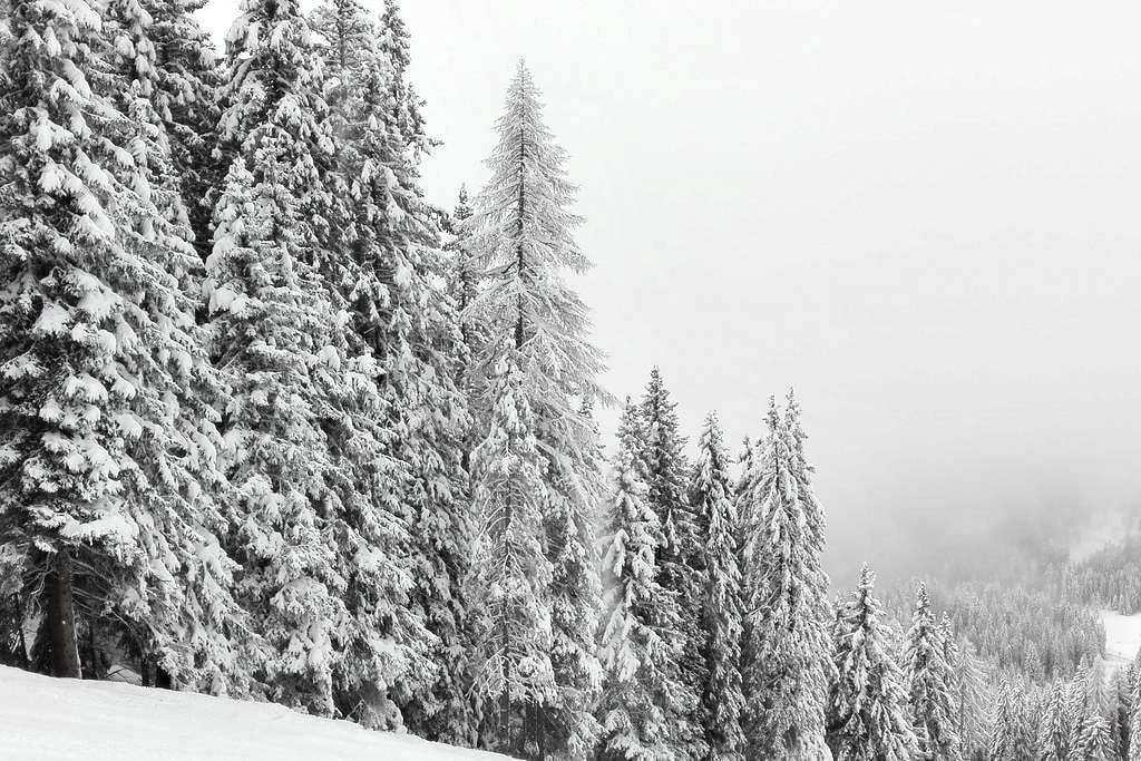 Apt. Val Rendena - Skiarea - Caderzone - Daire