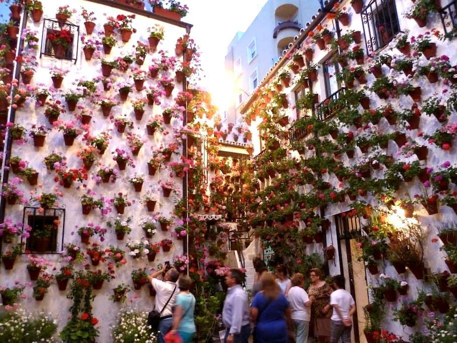 Apart con encanto en cuna de patios - Córdoba - Apartment