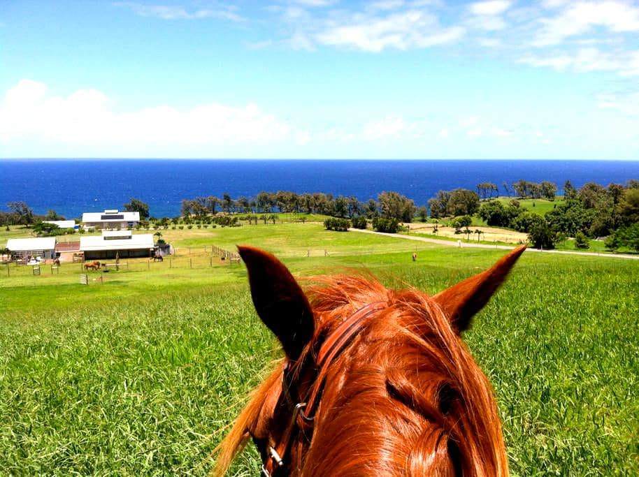 Hawaiian Oceanfront Nature Retreat - Kapaau