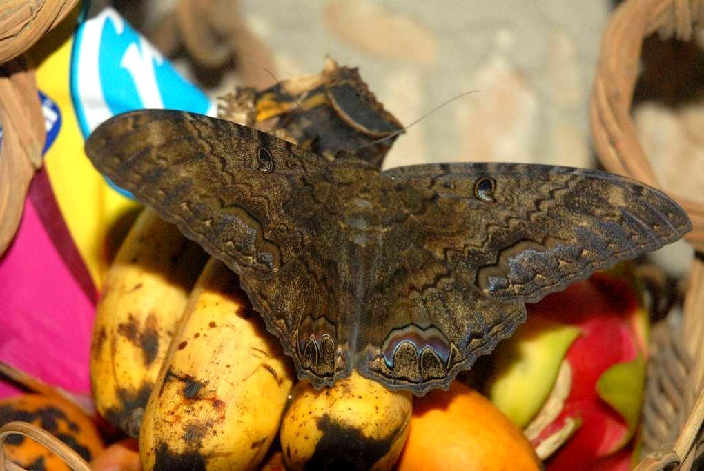 15 minutes from Chichen Itza - Tinum - Bed & Breakfast