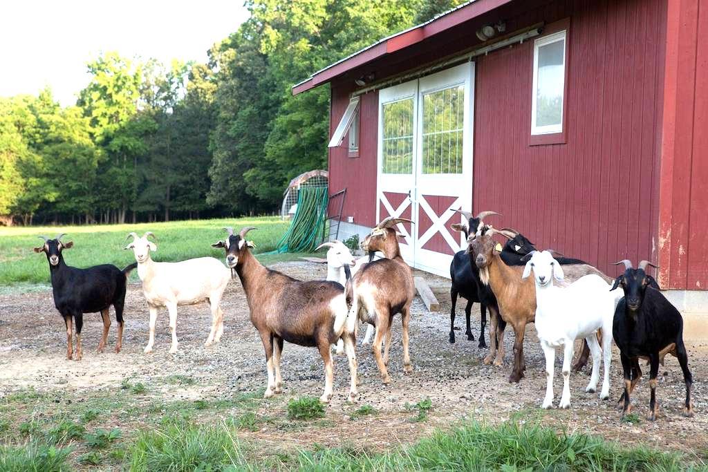 Waverly Farms - The Oak Room - Burkeville - Bed & Breakfast