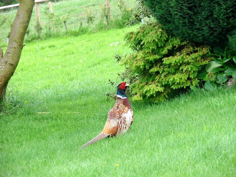 Bird's Nest Caravan - Congleton - Chatka