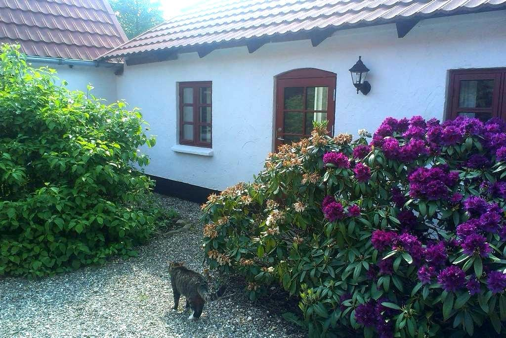 Stay at cosy Danish Vineyard - Viborg - Bed & Breakfast