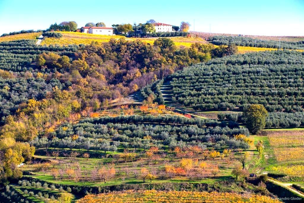 Agriturismo Casa Zen - Marcellise di San Martino Buon Albergo - 住宿加早餐
