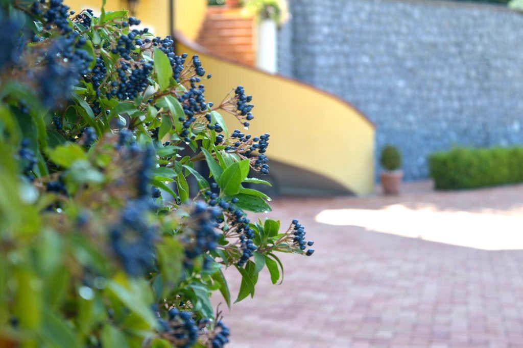 La tavernetta negli ulivi - Lauria - Apartment