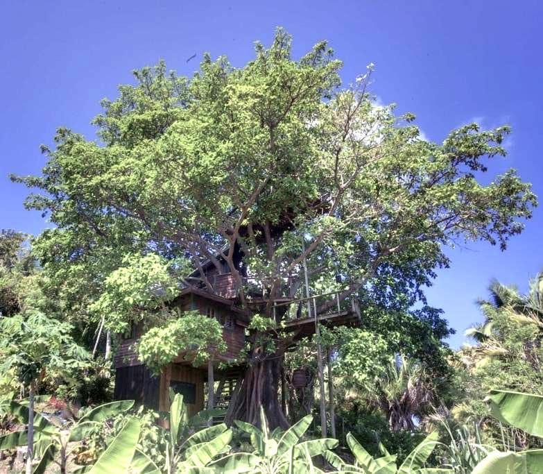 Utila Treehouse, Romantic and Lush! - Utila