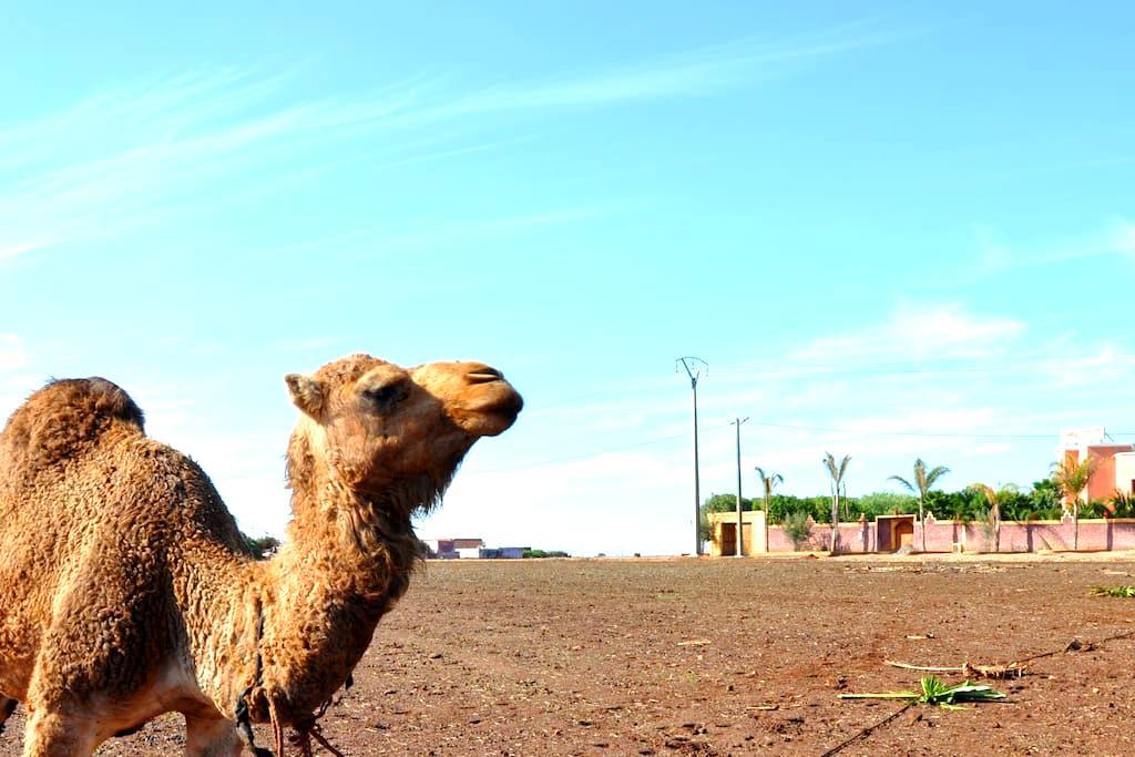 Riad Hamdani, un oasis à 3min de Casa Aéroport - Casablanca - Bed & Breakfast