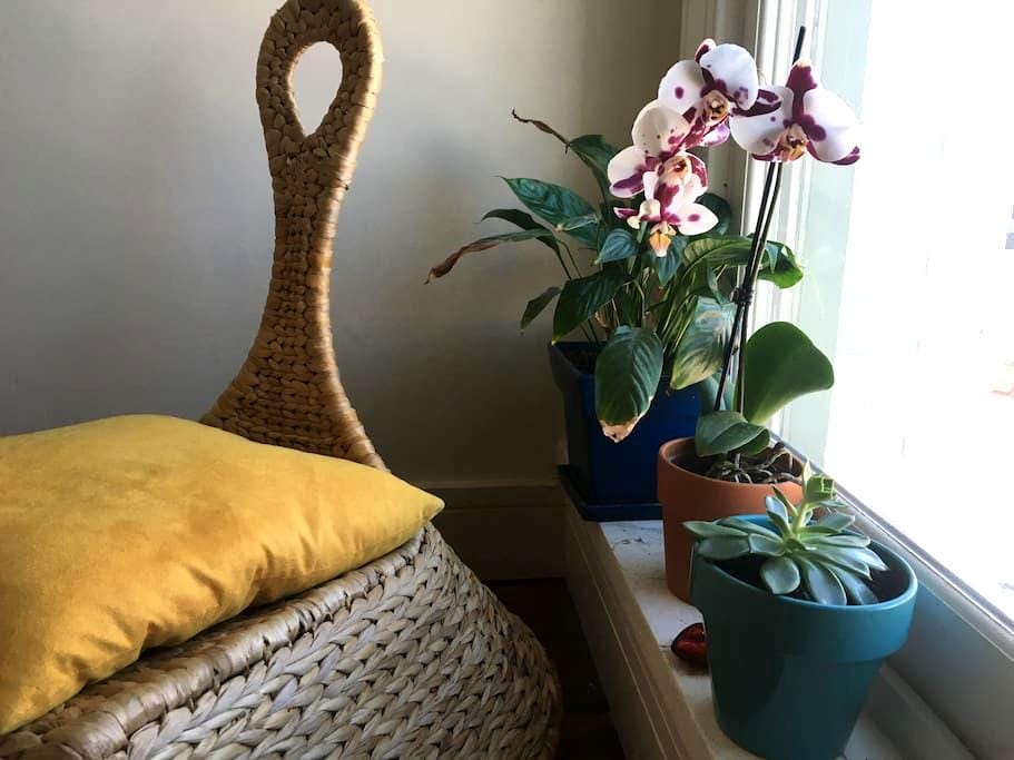 Creative Sanctuary in Downtown Durham - Durham - Departamento