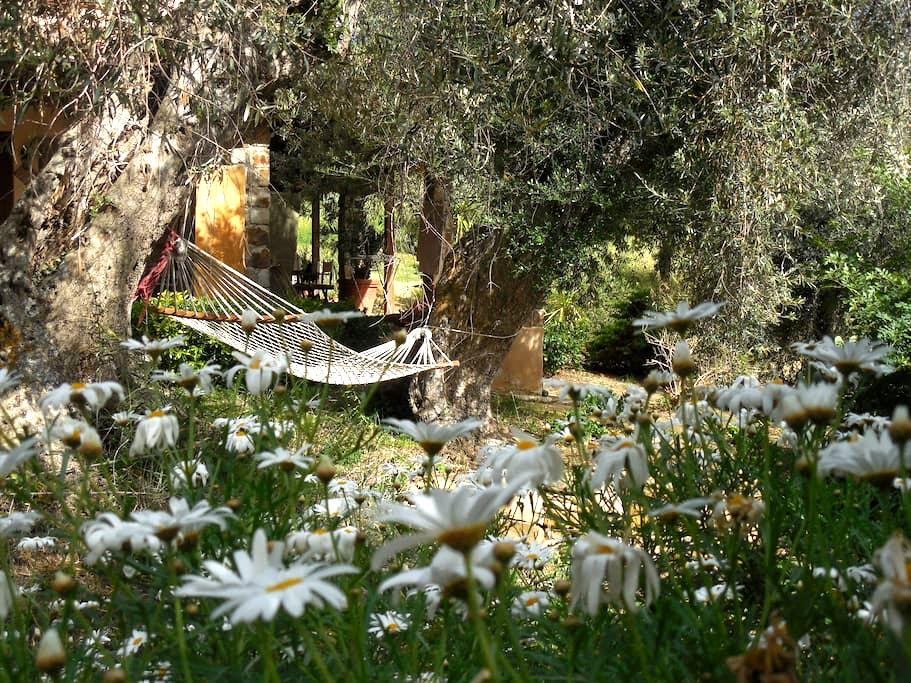 always paradise - Castelbuono - Bed & Breakfast