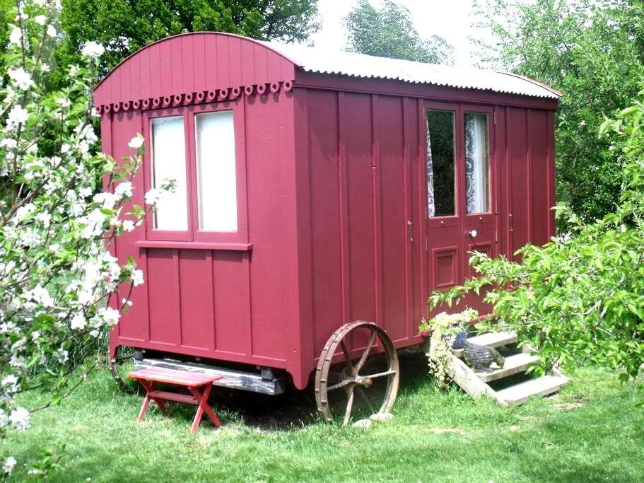Shepherd's Hut Glamping - Motupiko - Hut