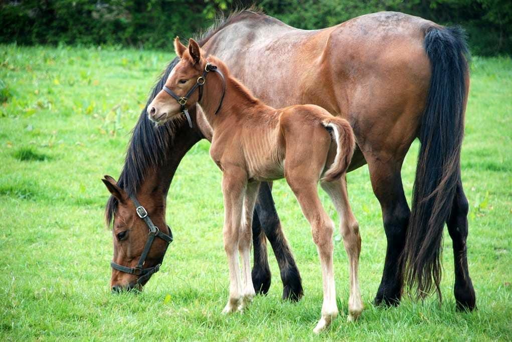 Gîte Campagne - Elevage de chevaux, 10 k de la mer - Catteville - Dům