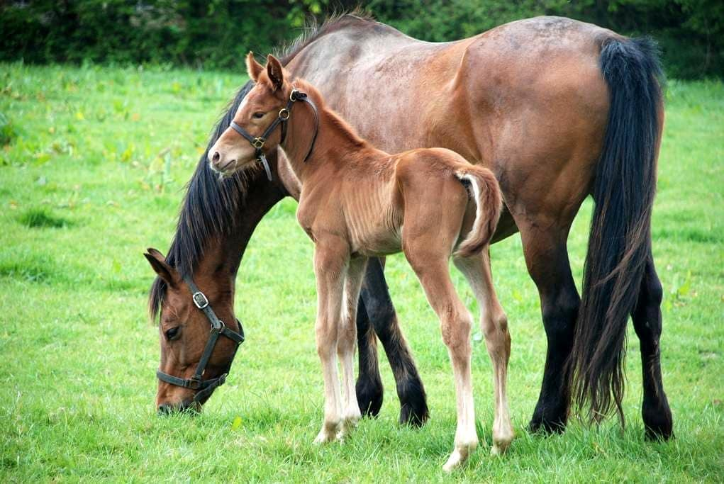 Gîte Campagne - Elevage de chevaux, 10 k de la mer - Catteville - Casa