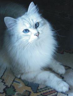 Ciao! Sono Sakura, una dolcissima gattina. I miei