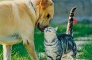 AMO PROFONDAMENTE GLI ANIMALI E VIVERE IN CAMPAGN