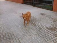 Susana From Valencia, Spain