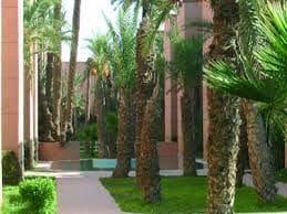 Sophiane from Marrakech