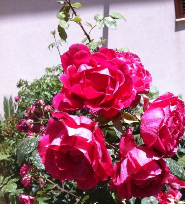 Rosa from Castellammare del Golfo