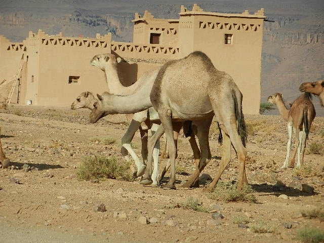 Addi From Tagounite, Morocco