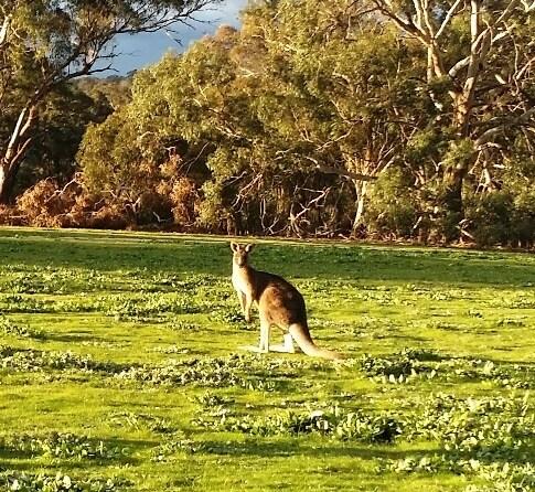 Jackie From Essendon, Australia