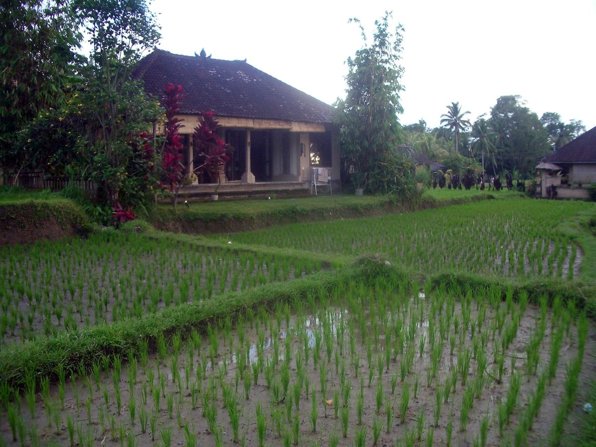 1 bedroom house in Ubud!!