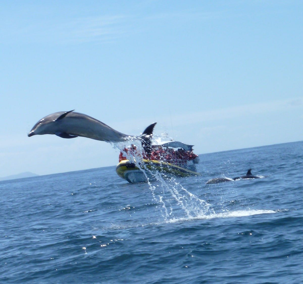 Taken by one of our guests on a Bruny Island Boat Cruise
