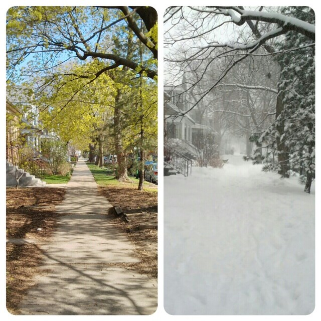 Our oasis in the city-Quiet beauty spring and winter.