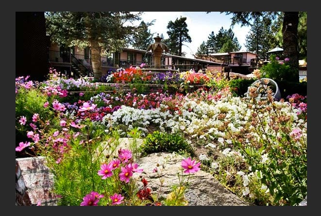 award winning floral displays amongst the tall tahoe pines. A must see. Thousands of Kodak moments have been taken here including our wedding photos. We were married on our beach here.