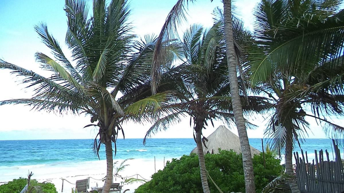 Alquileres vacacionales y a corto plazo en tulum airbnb for 97 the terrace ocean grove