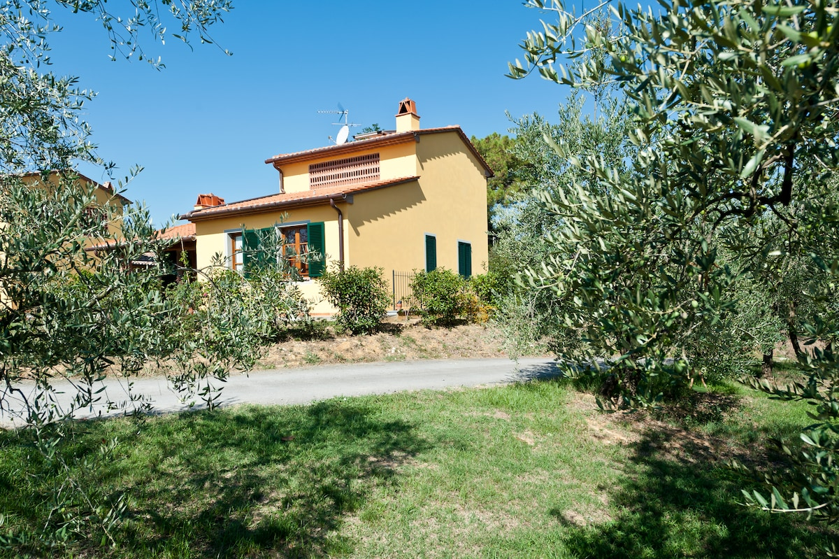The house seen between the leaves of olive-trees
