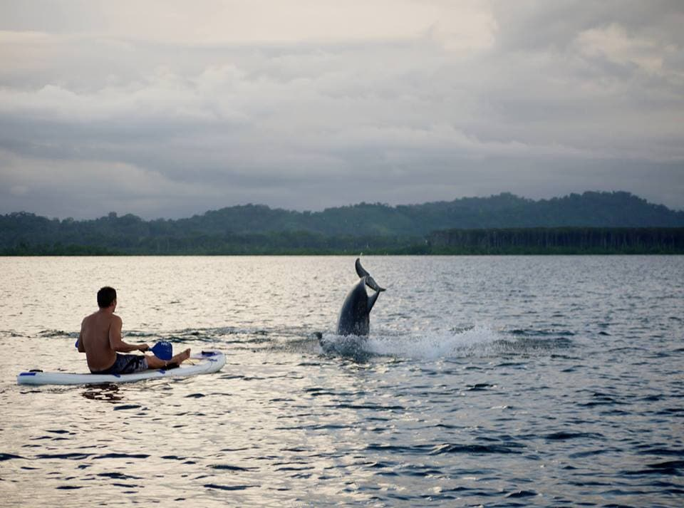Make close encounters with Dolphins on kayak or SUP? Our lagoons are packed with dolphins